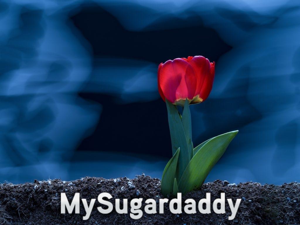 Das Erblühen und Stärken einer Beziehung. Zu sehen ist eine Tulpe die aus der Erde sprießt.